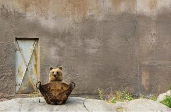 Photo: Mimmi, Ahtari zoo, Finland. By Meta Penca