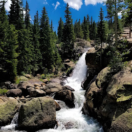 by Natures Grenade - Landscapes Forests