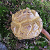 Boletes Mushroom