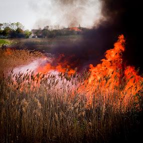 a fire tree by Lucian Petrea - Artistic Objects Other Objects ( pwcfire, fire )