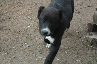 Photo: maschio BOND 3 mesi e mezzo