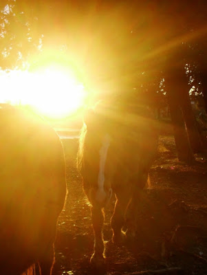 Cavalli tra la luce di Funghetto97