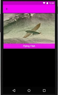 Fly Fishing Apps - náhled
