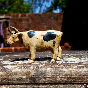 Cow Toy by Abhishek Mestry - Novices Only Macro ( macro, toy, blocklens, cow, perfect )