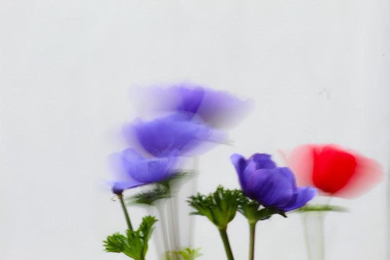 Arriva la primavera  di giacomo_torresin