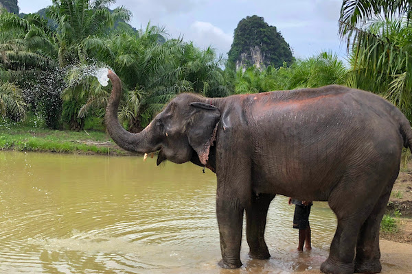 Walk with the elephants to a nearby river pond