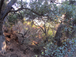 Photo: The woodsy sanctuary along the lower end of Colby Trail