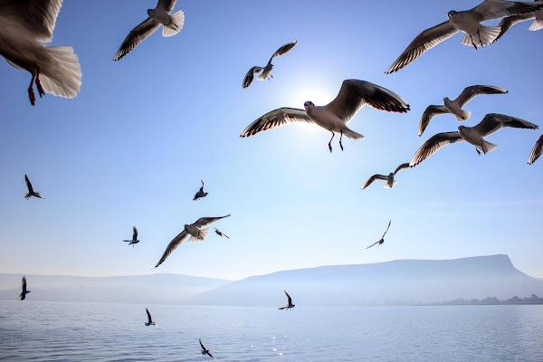 Volere Volare di ytse_jam