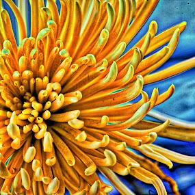 Cactus Chrysanthemum by Judy Wright Lott - Digital Art Things ( imac, bellingham, artistic interpretation, intensify pro, yellow flowers, macro, software, nature, cactus mums, greenery, digital art, summer, artistic vision, flowers )
