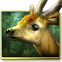 Forest HD icon
