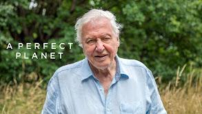 A Perfect Planet thumbnail
