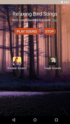 鳥の歌の音をリラックス