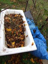 Photo: preparing tub for the winter, plastic bags are for insulation. fresh Autumn leaves are added. composting generates heat to protect the worms from freezing.  csak egy kevés gilisztás humuszt hagytam a kádban, a többit feltöltöttem őszi lombbal.