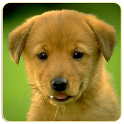 Dogs Memory Game Free icon