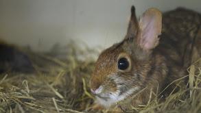 Baby Bunnies, Big World thumbnail