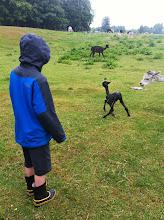 Photo: Tilbage på marken - den lille vil opat gå - og kæmper.