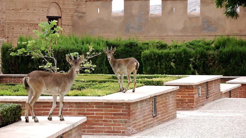 Arturo del Pino, director de la Alcazaba, compartió ayer esta curiosa foto.
