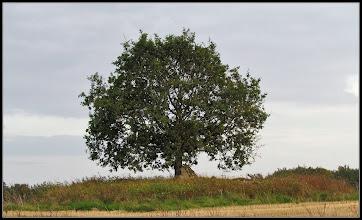 Photo: 24. september 2011 - Træet