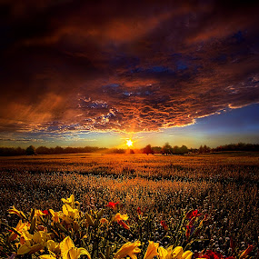 Drifting by Phil Koch - Landscapes Prairies, Meadows & Fields ( summer. spring, vertical, wisconsin, natural light, photograph, farmland, yellow, phil koch, leaves, spring, sun, photography, farm, love, nature, autumn, ice, snow, horizons, flowers, inspired, clouds, office, orange, green, twilight, agriculture, horizon, scenic, morning, portrait, field, environment, red, winter, season, blue, national geographic, sunset, serene, peace, fall, meadow, earth, sunrise, landscapes, floral, inspirational,  )