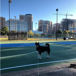 Baksetball courts and wide open spaces. Photo by @kumatron.the.shiba.