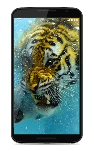 Tiger In Water LWP