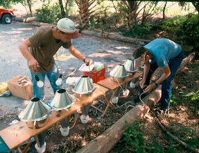 Photo: Setting up Berlese funnel traps in the field
