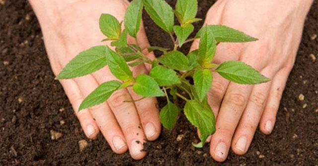 Trồng cây xanh sẽ đem đến cho con người sức khỏe tốt hơn