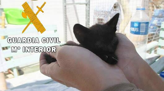 La Guardia Civil salva a dos gatos de corta edad abandonados en Roquetas