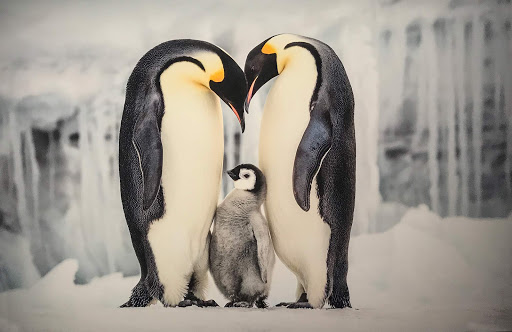 "penguins-photo-museum.jpg - ""Parental Care,"" an example of wildlife photography at Fotografiska, just steps from the cruise pier in Stockholm."