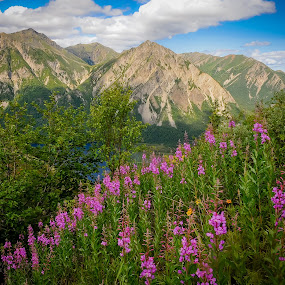 Mountain Overlook Above Lake Kijik Alaska by Kevin Beasley - Landscapes Mountains & Hills ( outdoor, national park, mountains, wildflower, mountain, wildflowers, nature, alaska, fireweed, kijik, lake clark, flower,  )