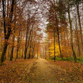 Sauvabelin by Nikolas Ananggadipa - City,  Street & Park  City Parks ( lausanne, park, autumn, trees, switzerland,  )