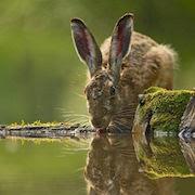 К чему приснился заяц?