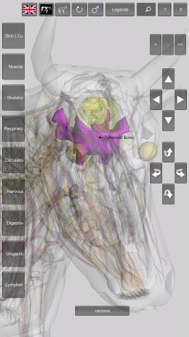 3D Bovine Anatomy Screenshot