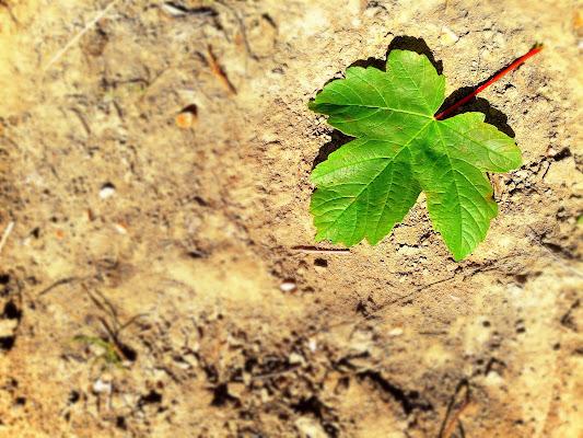 Green Leaf di Kamone