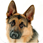 German Shepherd Dog Images