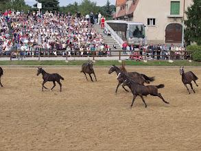 Photo: Pferde Show bei der Hengstparade Moritzburg