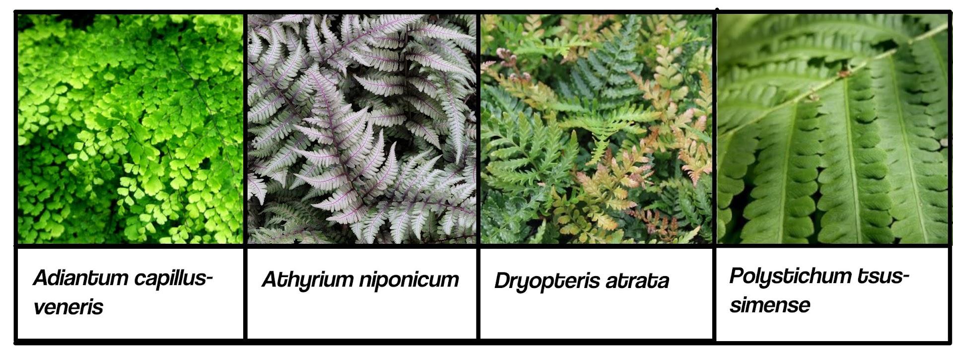 Ejemplo de especies que se pueden instalar en jardines verticales de interior