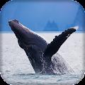 Whale Live Wallpaper : 7fon & LWP APK