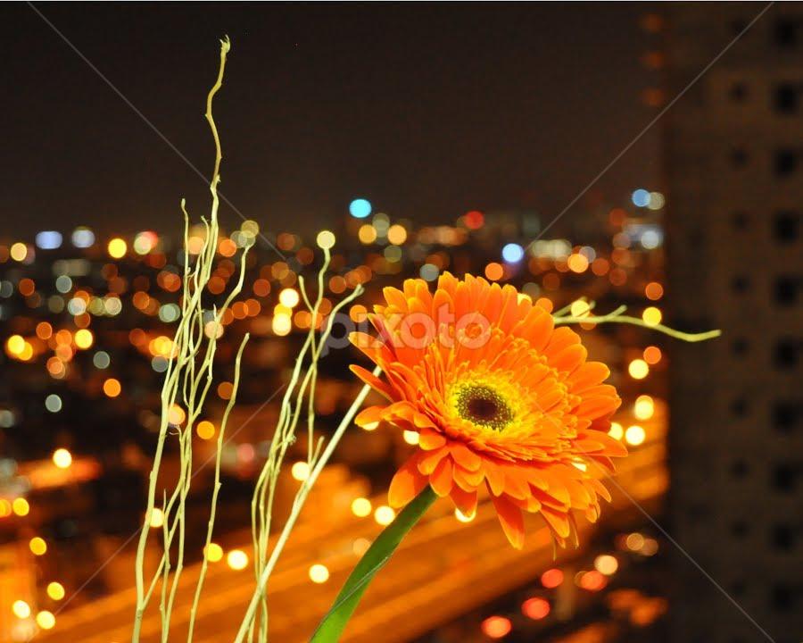 Towering Beauty by Teza Del - Nature Up Close Flowers - 2011-2013 ( orange, gerbera )