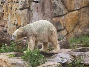 Photo: Knut erkundet lieber die Anlage ;-)