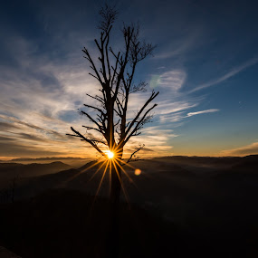 Sun behind a tree by Matic Cankar - Landscapes Sunsets & Sunrises ( clouds, hill, winter, tree, serene, sunset, beautiful,  )