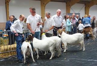 Photo: Rubriek 5: Boergeiten geboren in 2013-2014.