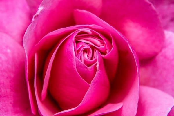 Abbraccio di petali di rimix92