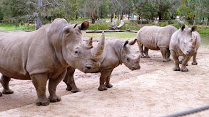 Rhi-yes or Rhino? thumbnail