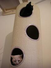 Photo: die Katzonauten sind vollständig angetreten..... oder fehlt hier noch wer??? (Katzenzimmer)