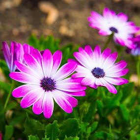 20150529-_S2A0283.jpg by Greg Bracco - Flowers Flower Gardens (  )