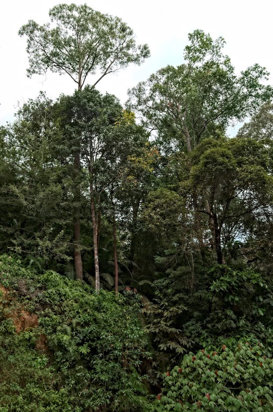 siti di incontri Penang