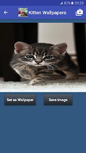 sweet baby cat live wallpaper apk