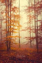 Photo: Lost in autumn