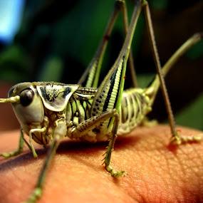 little friend by Darko Nachevski - Animals Insects & Spiders